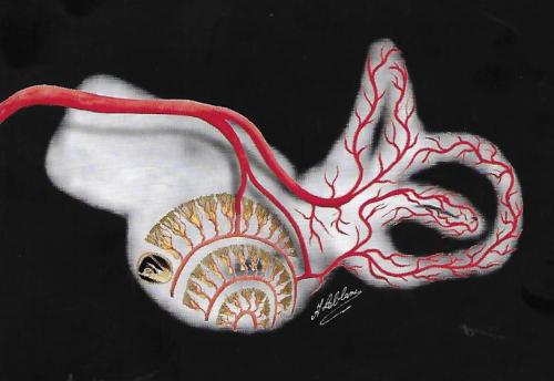 Diagramme pour la vascularisation labyrinthique, en superposition à une vue tomodensitométrie des canaux semi circulaires et cochléaire